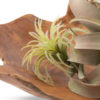 Faux Airplant Set for Rent Madison WI A La Crate Rentals